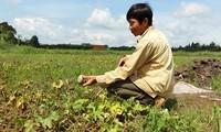 Seguro agrícola – tabla de salvación los cultivadores vietnamitas