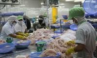 Rechazan información desfavorable contra pescado Tra de Vietnam en mercado europeo