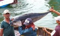 Vietnam determinado por el desarrollo sostenible y responsable de la pesca