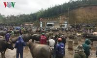 Tra Linh, el mayor mercado de ganado del norte de Vietnam