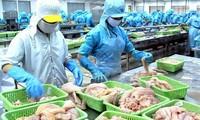 베트남 해산물에 대한 EC  옐로우 카드 삭제 노력