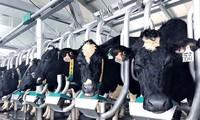 Vinamilk  100% A2 청정 생우유 제품