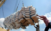 10월 쌀 수출액  520백만 톤 달성