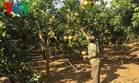 선라 성의 하이테크 응용 농업 개발