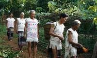 마 (Mạ) 족의 문화 풍속