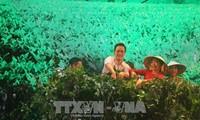 Festival floral de Da Lat: ouverture de la fête de la soie et du thé de B'Lao