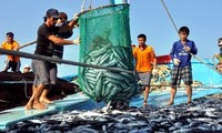 Le Vietnam réalise les recommandations de l'UE sur la pêcherie responsable et durable