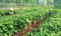 Visioconférence nationale sur l'agriculture, les paysans et les zones rurales