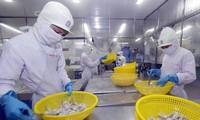Exportations de crevettes: 4,2 milliards de dollars visés cette année