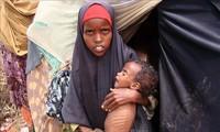 Malnutrition infantile : Signal d'alarme des agences humanitaires de l'ONU