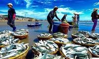 베트남, 어업의 지속 가능한 발전을 위해 EC 권장 사항 단계적으로 완성