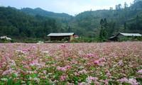 베트남 하짜잉의 아름다움을 탐구하자!
