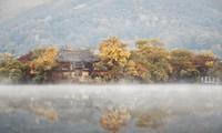 베트남 사진작가의 사진을 통해 바라본 한국 가을의 아름다움