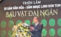 응옥링 (Ngoc Linh) 수삼 -  베트남 산림의 보물