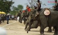 닥락–판돈 지역의 코끼리 대회 열기