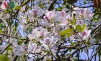 서북 지역의 반꽃으로 만드는 음식