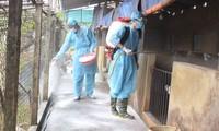 아프리카 돼지콜레라 방지를 위한 대책 마련