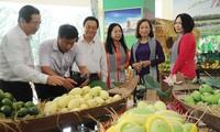 미국시장에 베트남의 첫 번째 망고 수출