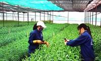 베트남 과학기술의 날: 농업 생산성 제고, 자연재해 방지를 위해 과학기술 응용