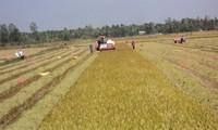 Thúc đẩy ứng dụng công nghệ cao vào sản xuất nông nghiệp tiểu vùng Tứ giác Long Xuyên