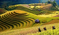 Provinsi Yen Bai mengadakan Pekan Kebudayaan, Olahraga dan Pariwisata  tentang pemandangan alam  nasional sawah terasering