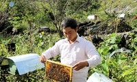 Модели выращивания чистых овощей и пчеловодства помогают выйти из бедности в Хазянге