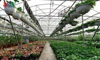 Молодые миллиардеры в новой цветочной деревне Суанкуан