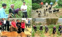 Содействие экспорту сельхозпродукции Вьетнама на требовательные рынки