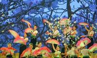 В рамках фестиваля баухинии пёстрой – 2019 пройдут разнообразные мероприятия