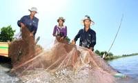 Dông Thap: les crues, enfin!