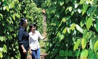 Le Vietnam ouvre son marché à terme agricole aux investisseurs étrangers