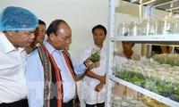Nguyên Xuân Phuc: le ginseng de Ngoc Linh est un trésor du Vietnam