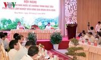 Trinh Dinh Dung plaide pour un développement durable de la sylviculture