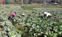 Lai Châu: le développement sera durable ou il ne sera pas