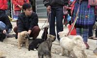 Les chiens Mông du marché de Bac Hà