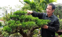 Le village de bonsaï de Vi Khê