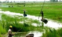 Tăng cường ứng phó với biến đổi khí hậu vùng đồng bằng sông Cửu Long