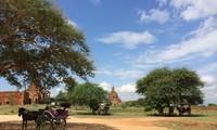 Bagan đẹp ngời trong nắng