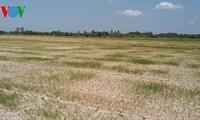 Người dân đồng bằng sông Cửu Long khắc phục ảnh hưởng biến đổi khí hậu