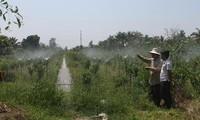 Hậu Giang phấn đấu có 70% hộ nông dân sản xuất, kinh doanh giỏi