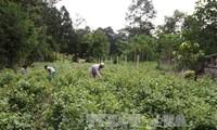 Việt Nam công bố Kế hoạch hành động quốc gia vì sự phát triển bền vững