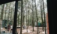 Triển lãm Art in the Forest – Summer 2019: Nghệ thuật thăng hoa với thiên nhiên