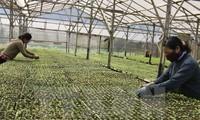 สหกรณ์แบบใหม่สร้างพลังขับเคลื่อนให้แก่การพัฒนาการเกษตร