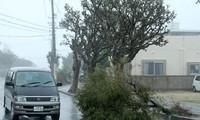 พายุไต้ฝุ่นจ่ามีถล่มญี่ปุ่น