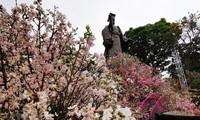 เทศกาลดอกซากุระญี่ปุ่น ฮานอย2019