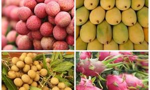 ベトナムの青果輸出市場を拡大