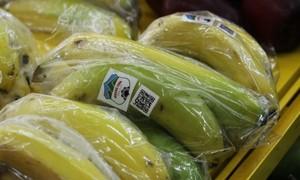 黄英嘉莱试销南美香蕉