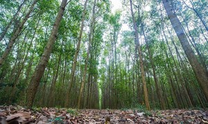 Forest protection and afforestation
