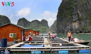 Nuevos medios de subsistencia para pescadores de la Bahía de Ha Long