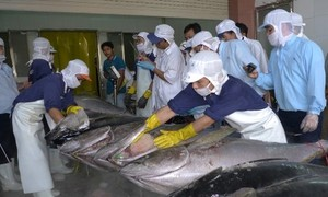 Vietnam por construir una industria de pesca sostenible